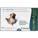 Revolution (For Dogs 40.1 - 85 lbs) - 6 Month Pack(Teal)