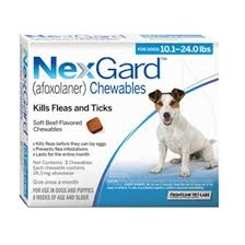 NexGard For Dogs (10-24lbs) (Blue)- 3 Dose Pack