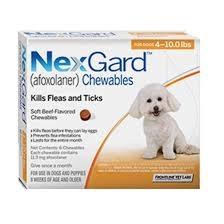 NexGard For Dogs (4-10lbs) (Orange)- 6 Dose Pack