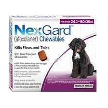 NexGard For Dogs (24.1-60lbs) (Purple)- 3 Dose Pack
